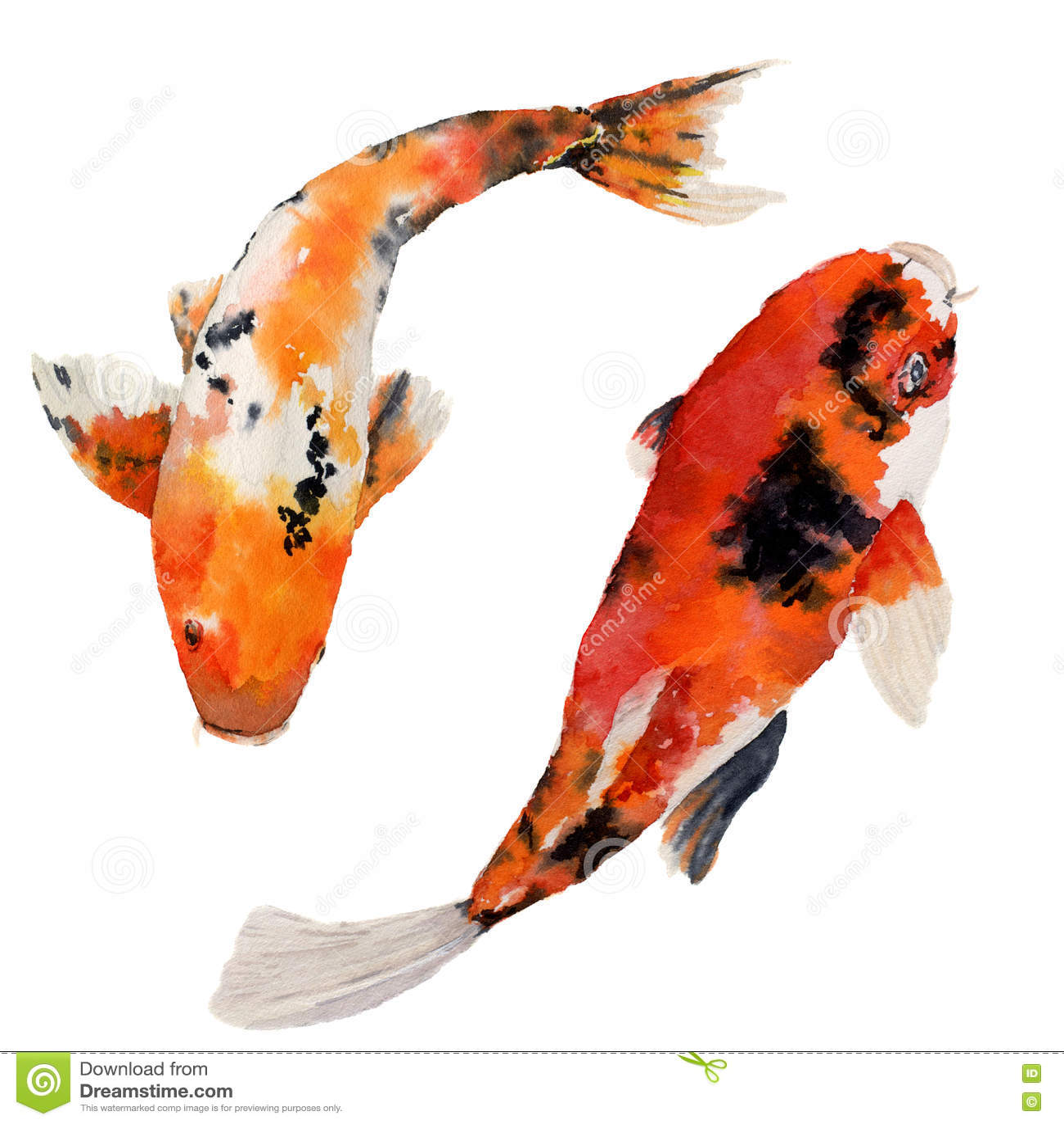 Watercolor oriental rainbow carp set koi fishes isolated for White koi carp
