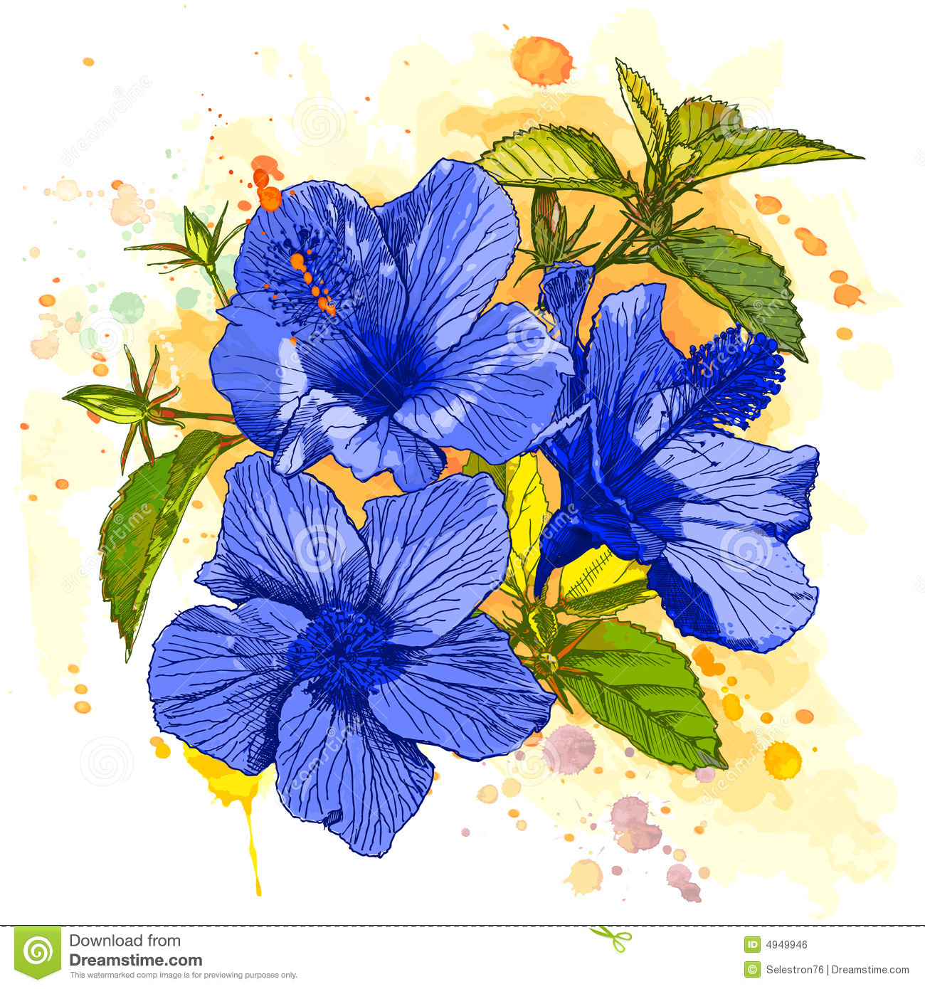 Watercolor Paint Hibiscus Flower Stock Vector Image