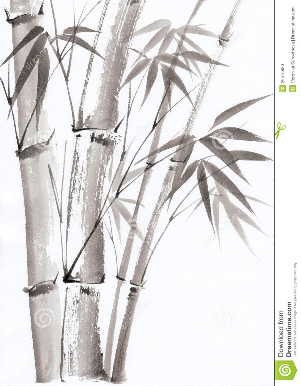 Watercolor Painting Of Bamboo Stock Photo - Image: 26575920