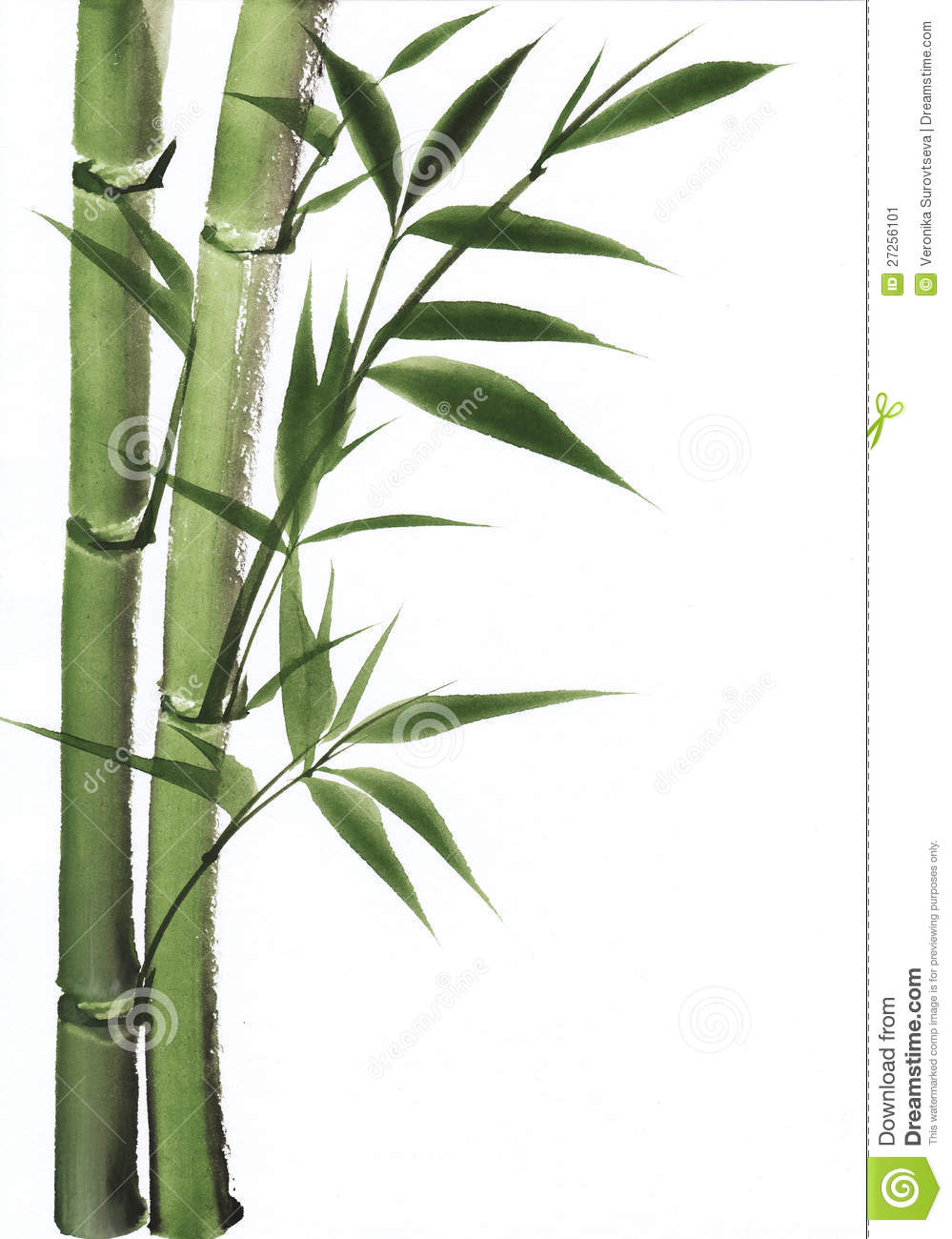 watercolor painting of bamboo stock illustration image. Black Bedroom Furniture Sets. Home Design Ideas