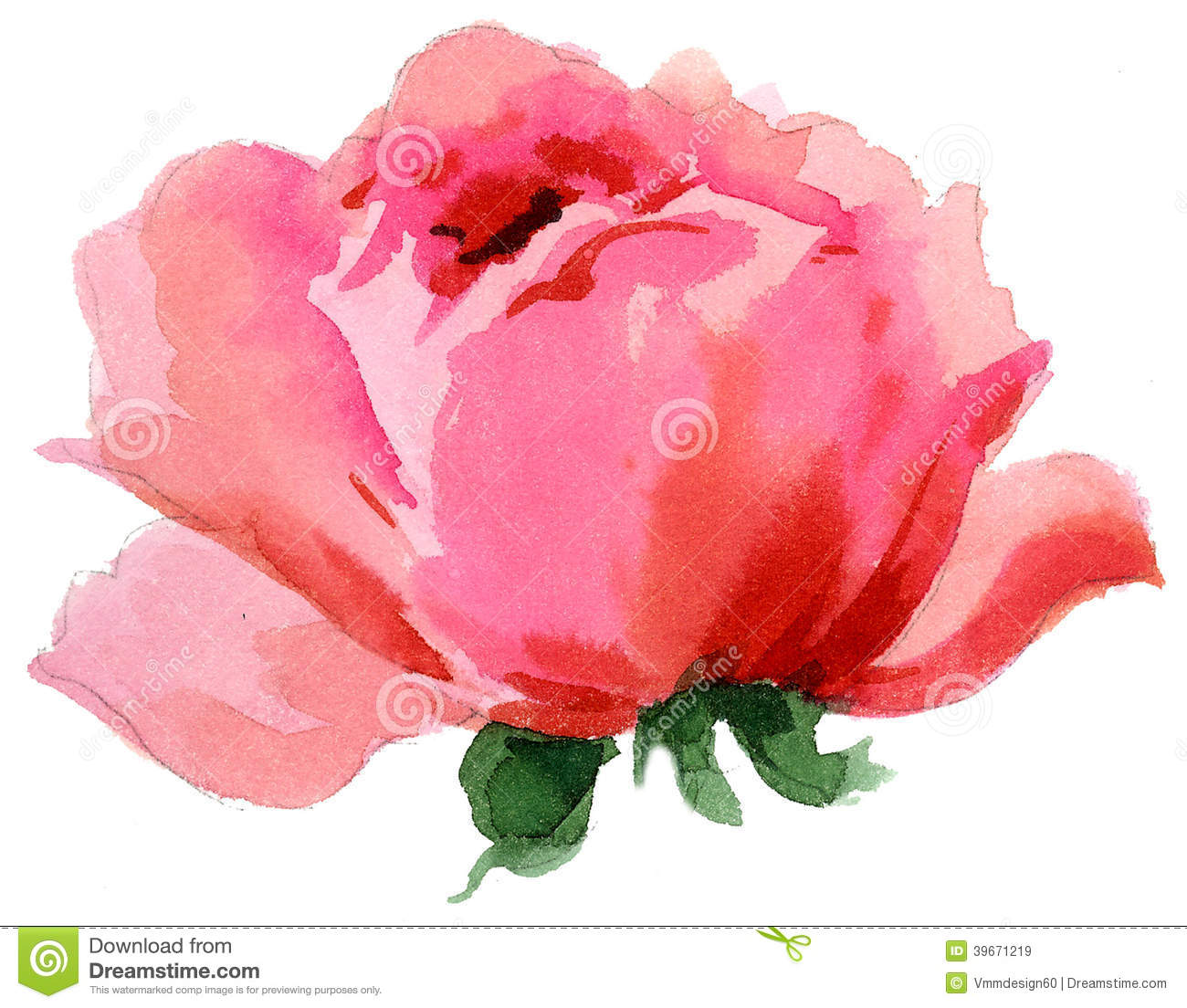 Watercolor Painting Of Beautiful Single Rose Stock Illustration