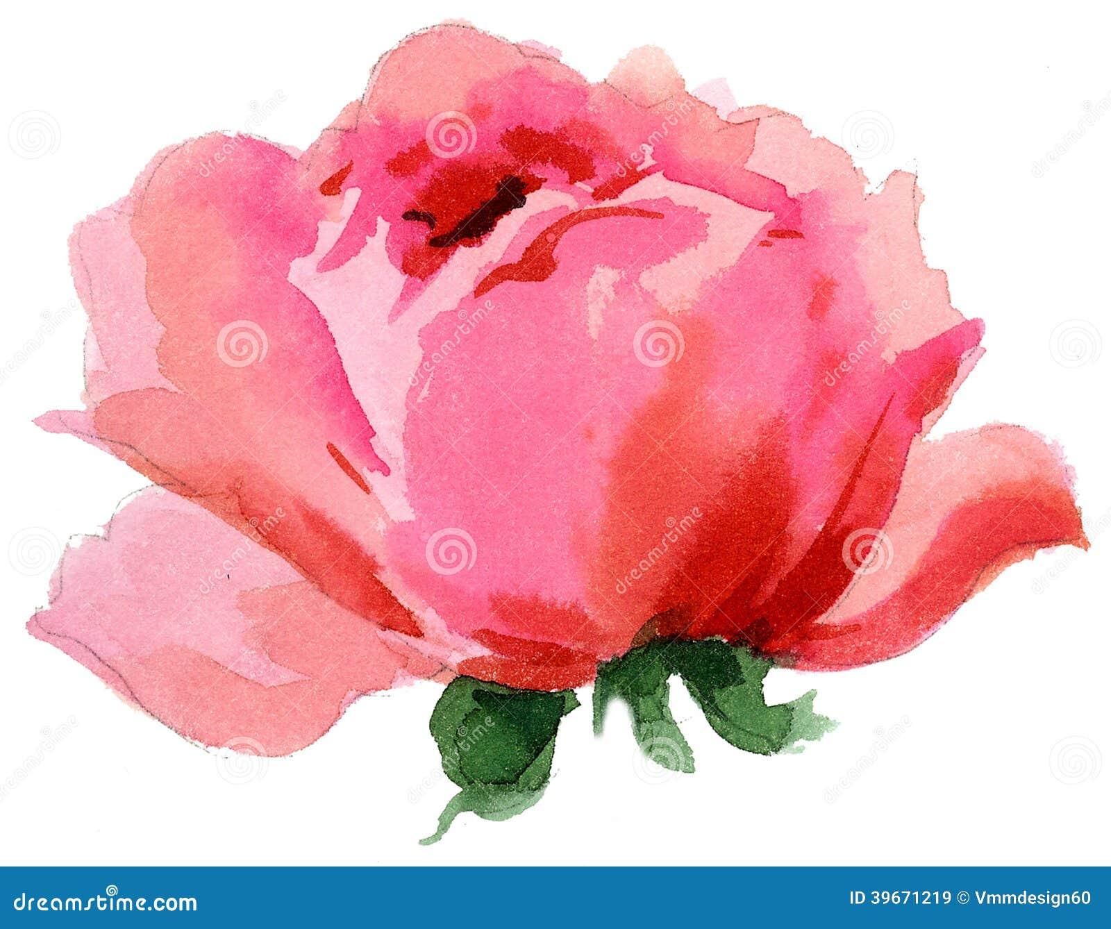 Watercolor Painting Beautiful Single Rose Stock Illustrations 574 Vectors Clipart