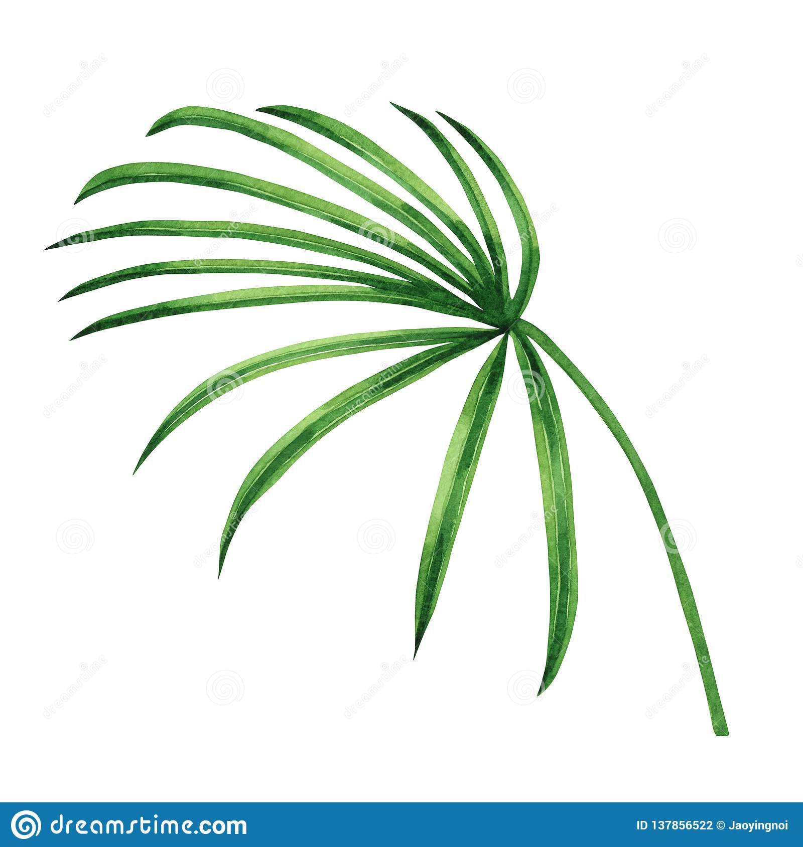 Watercolor Painting Coconut Palm Leaf Green Leaves Isolated On