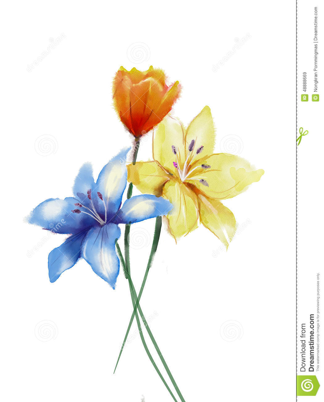 Watercolor Painting Flowers Isolated On White Background ...