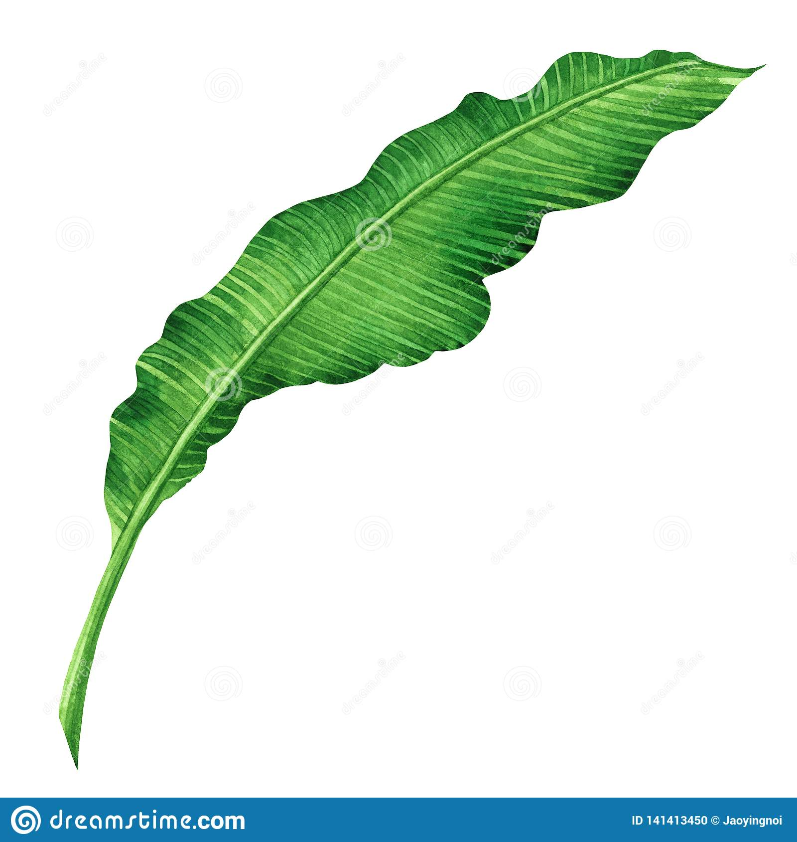 Watercolor painting green leaves isolated on white background.Watercolor hand painted illustration palm,banana leave tropical exot