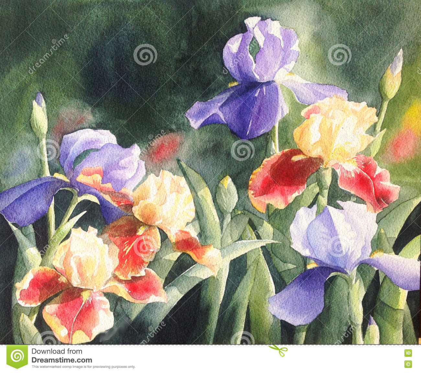 Watercolor painting illustration purple iris flower stock download watercolor painting illustration purple iris flower stock illustration illustration of paint growth izmirmasajfo