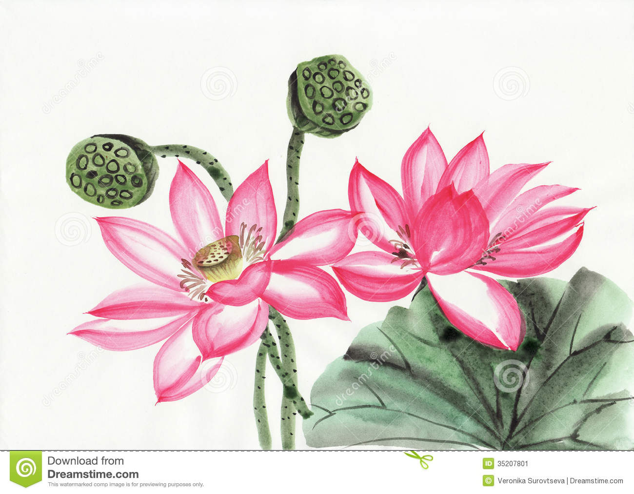 Watercolor painting of lotus flower stock illustration watercolor painting of lotus flower izmirmasajfo