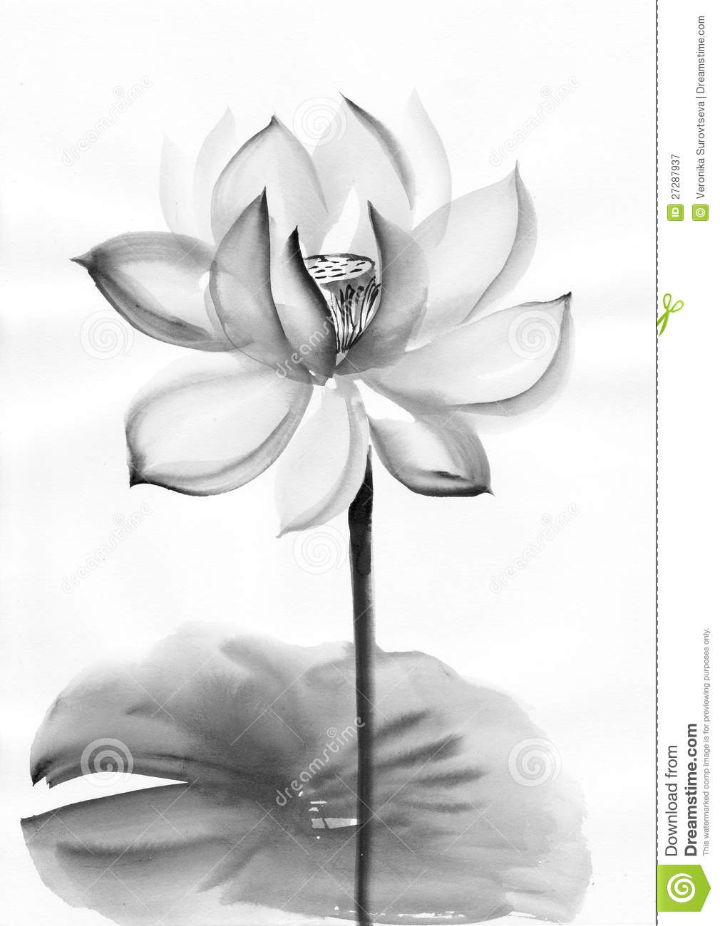 Watercolor Painting Of Lotus Flowers Stock Illustration