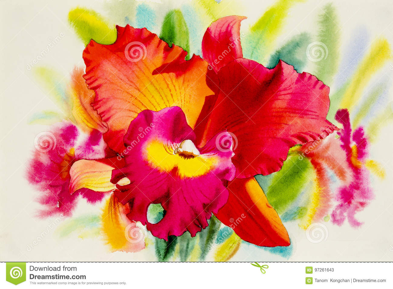 Watercolor Painting Orange Pink Red Color Of Orchid Flower. Stock ...