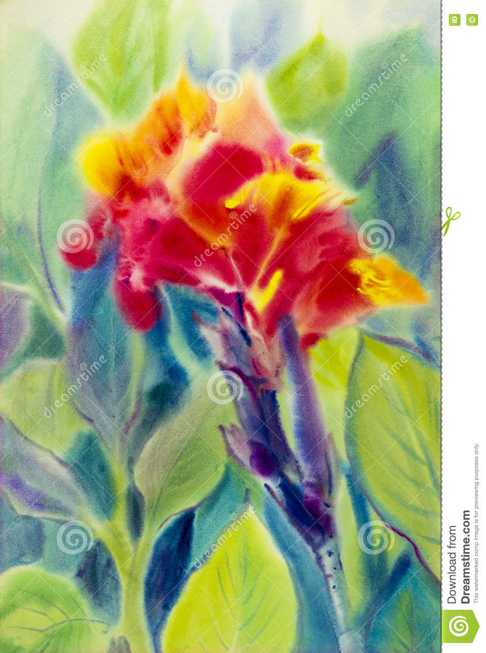 Watercolor Painting Original Flower Colorful Of Red Canna Lily