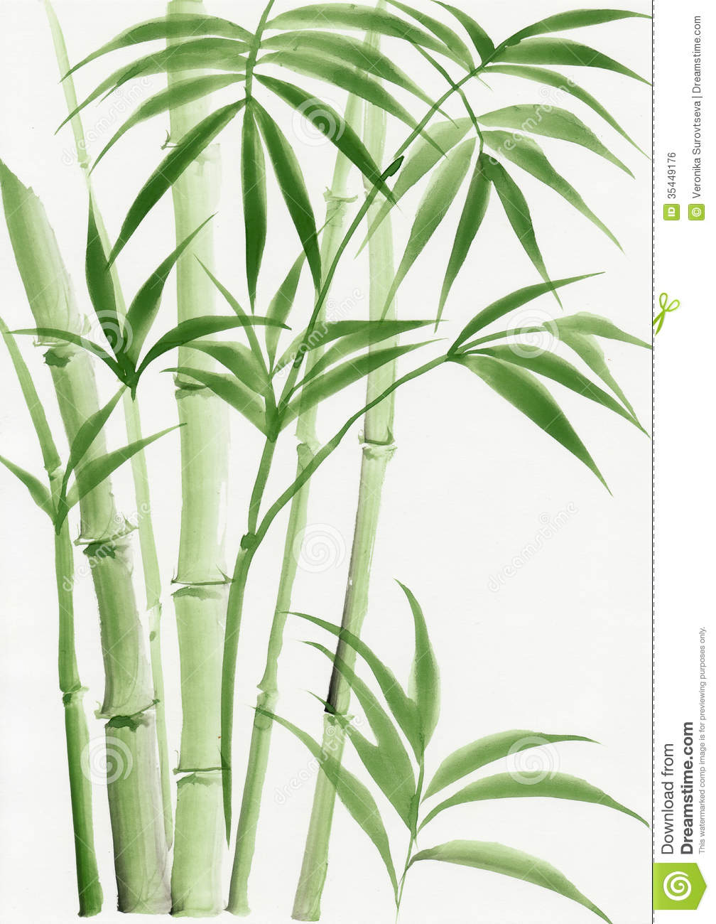 Watercolor Painting Of Palm Bamboo Stock Photo Image Of Leaves Original 35449176