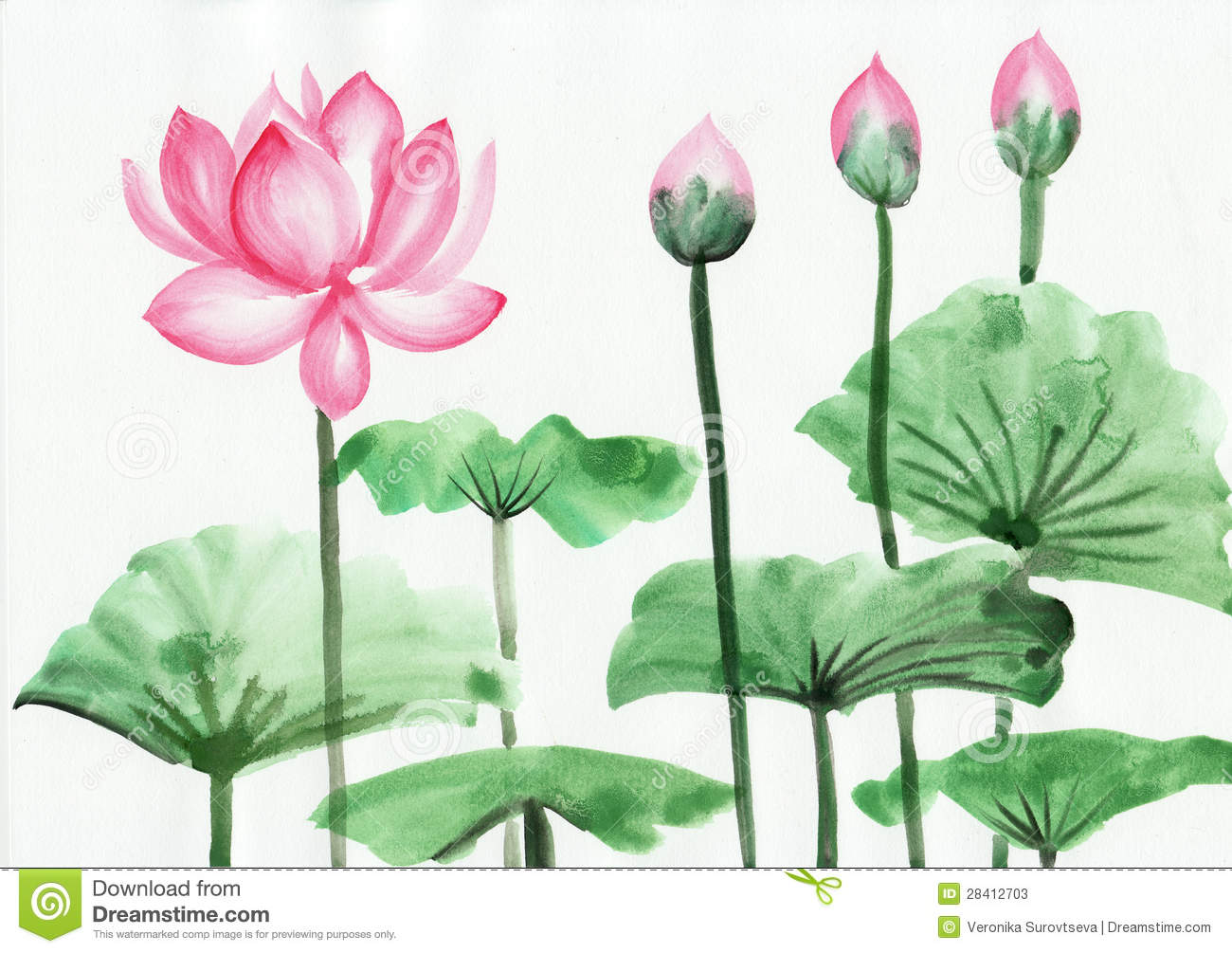 Watercolor painting of pink lotus flower stock illustration watercolor painting of pink lotus flower stock photos izmirmasajfo