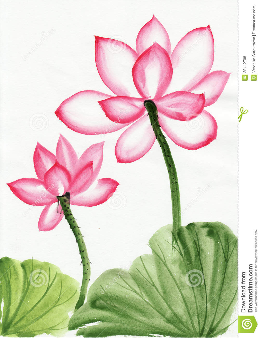 Watercolor Painting Of Pink Lotus Flower Stock Illustration