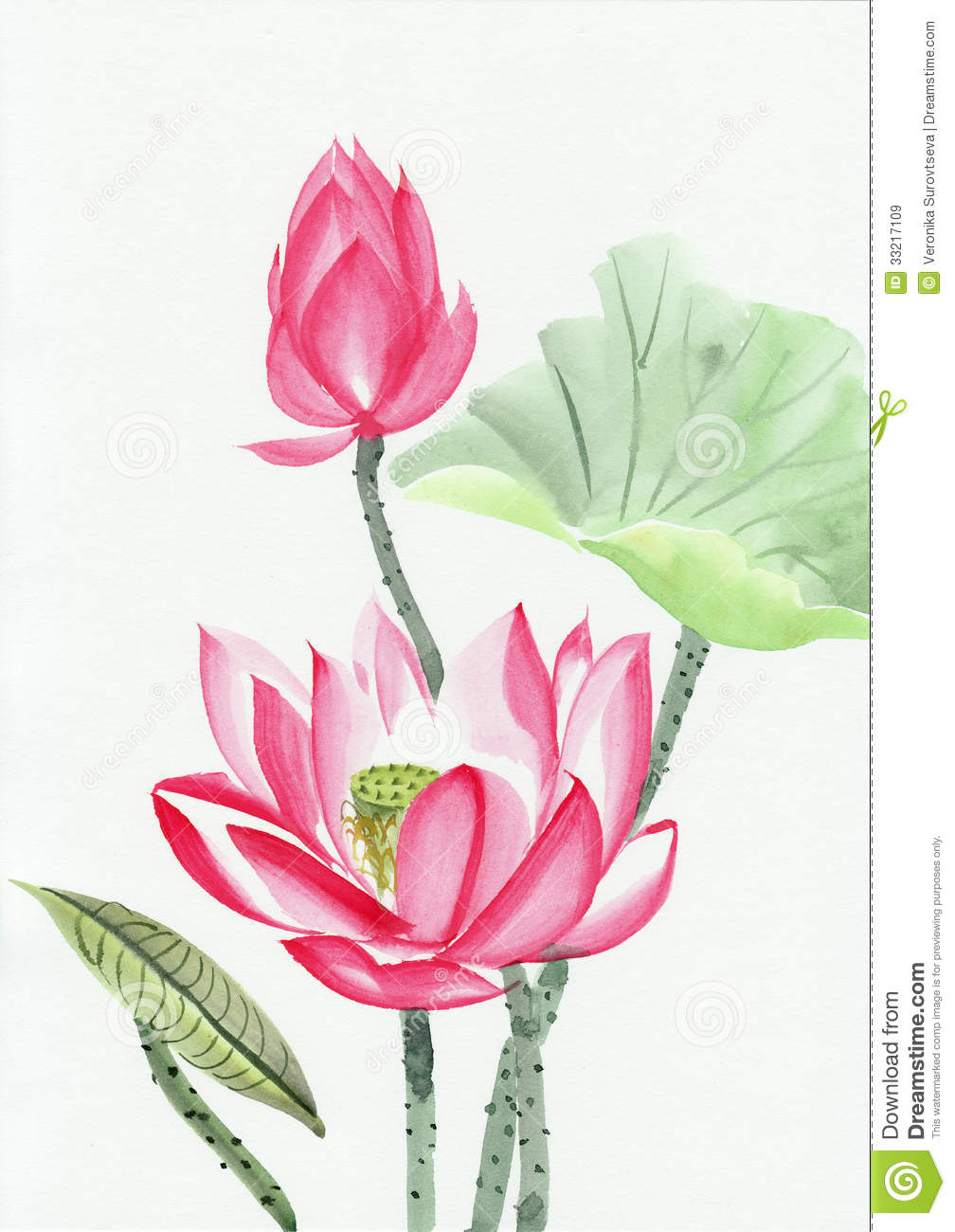 watercolor painting of pink lotus flower stock. Black Bedroom Furniture Sets. Home Design Ideas