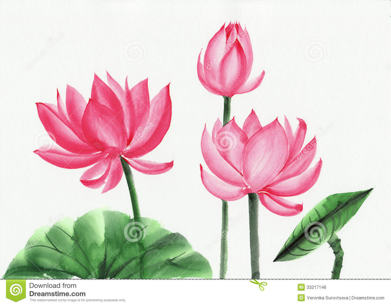 Watercolor painting of lotus flower stock illustration watercolor painting of pink lotus flower royalty free stock image izmirmasajfo