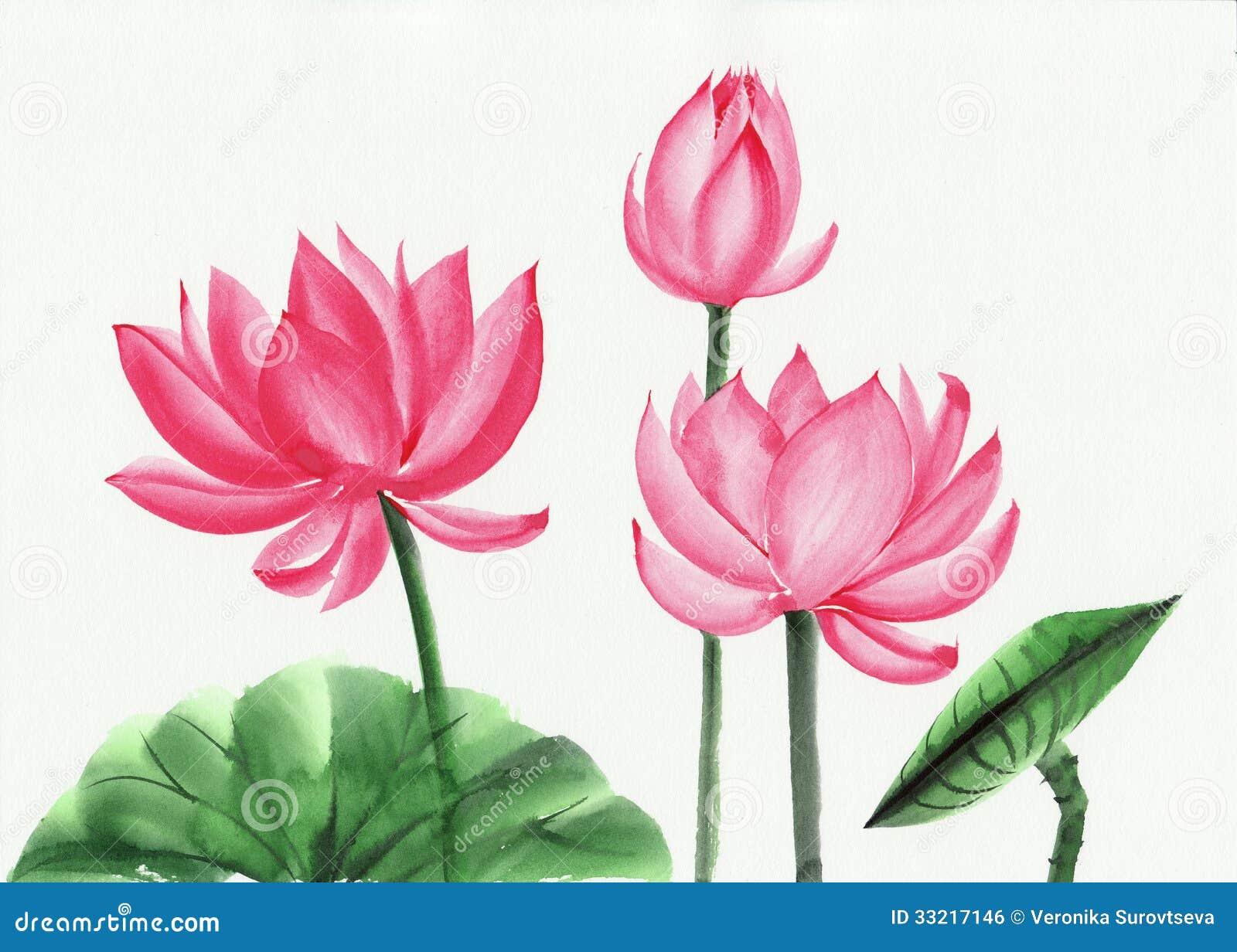 Lotus Flower Art pink lotus flower Royalty
