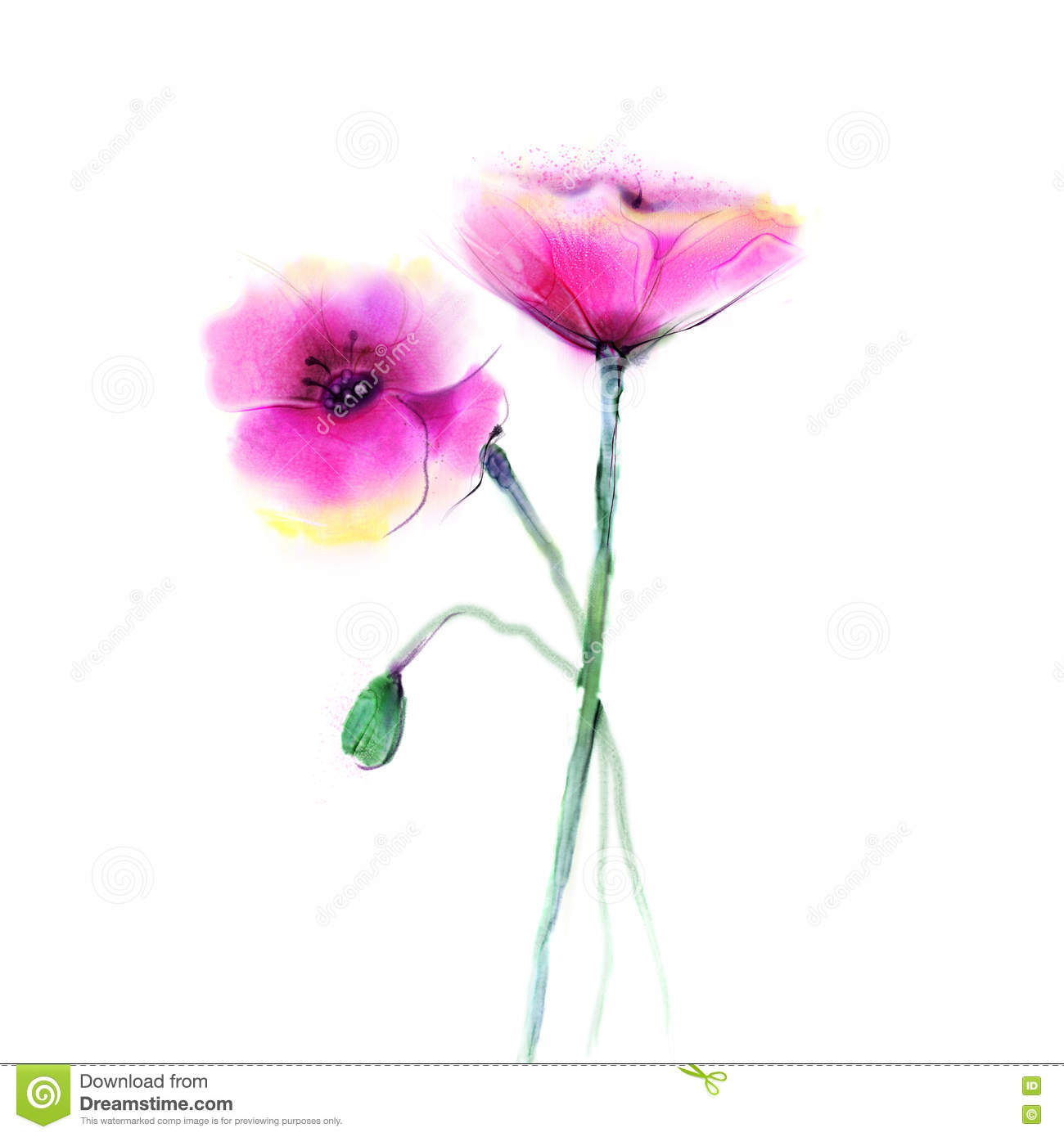 Watercolor Painting Poppy Flower Isolated Flowers On