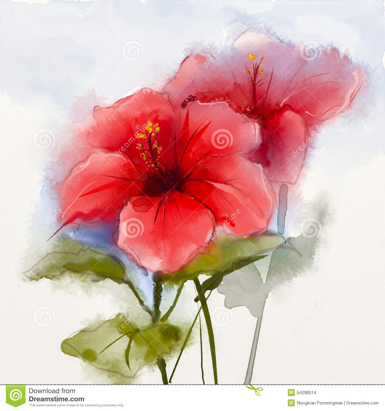 Watercolor Painting Red Hibiscus Flower Stock Illustration ...