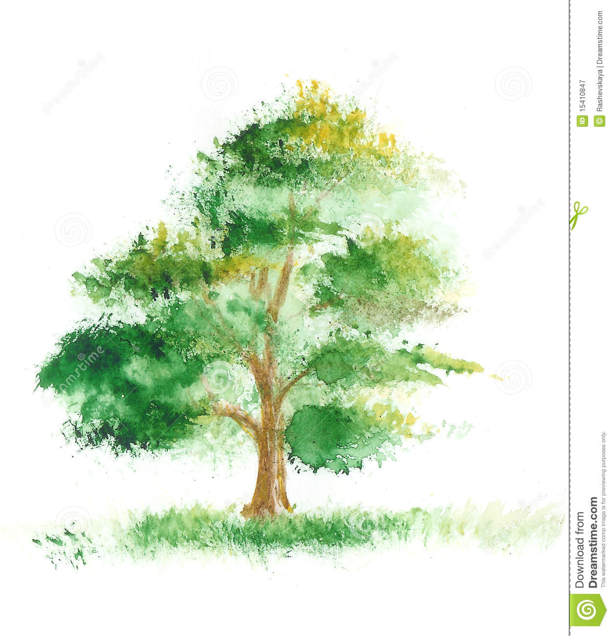 Watercolor painting of a tree stock illustration image for Pintura color albero