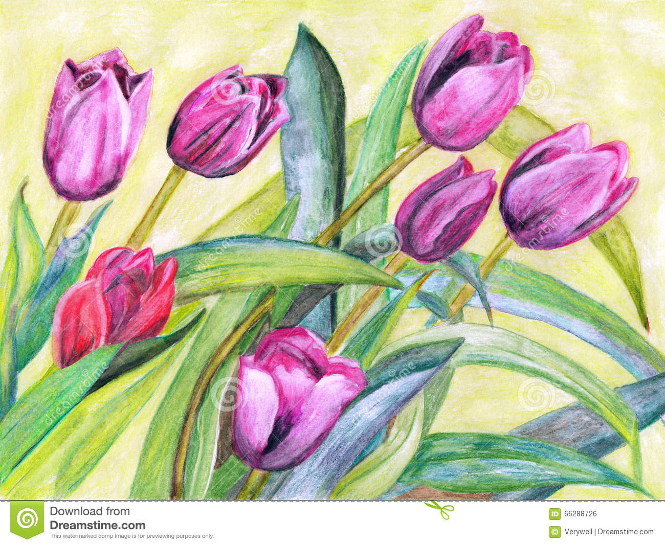 Watercolor Painting Tulips Stock Illustration Image
