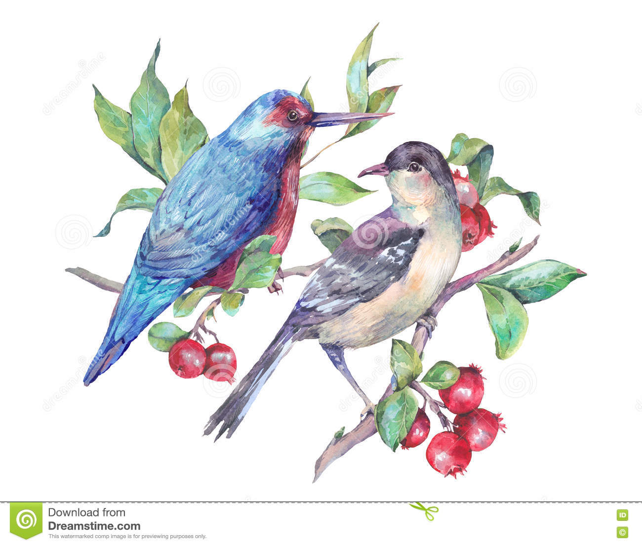 Watercolor Pair Of Birds On Branch With Red Berries Stock