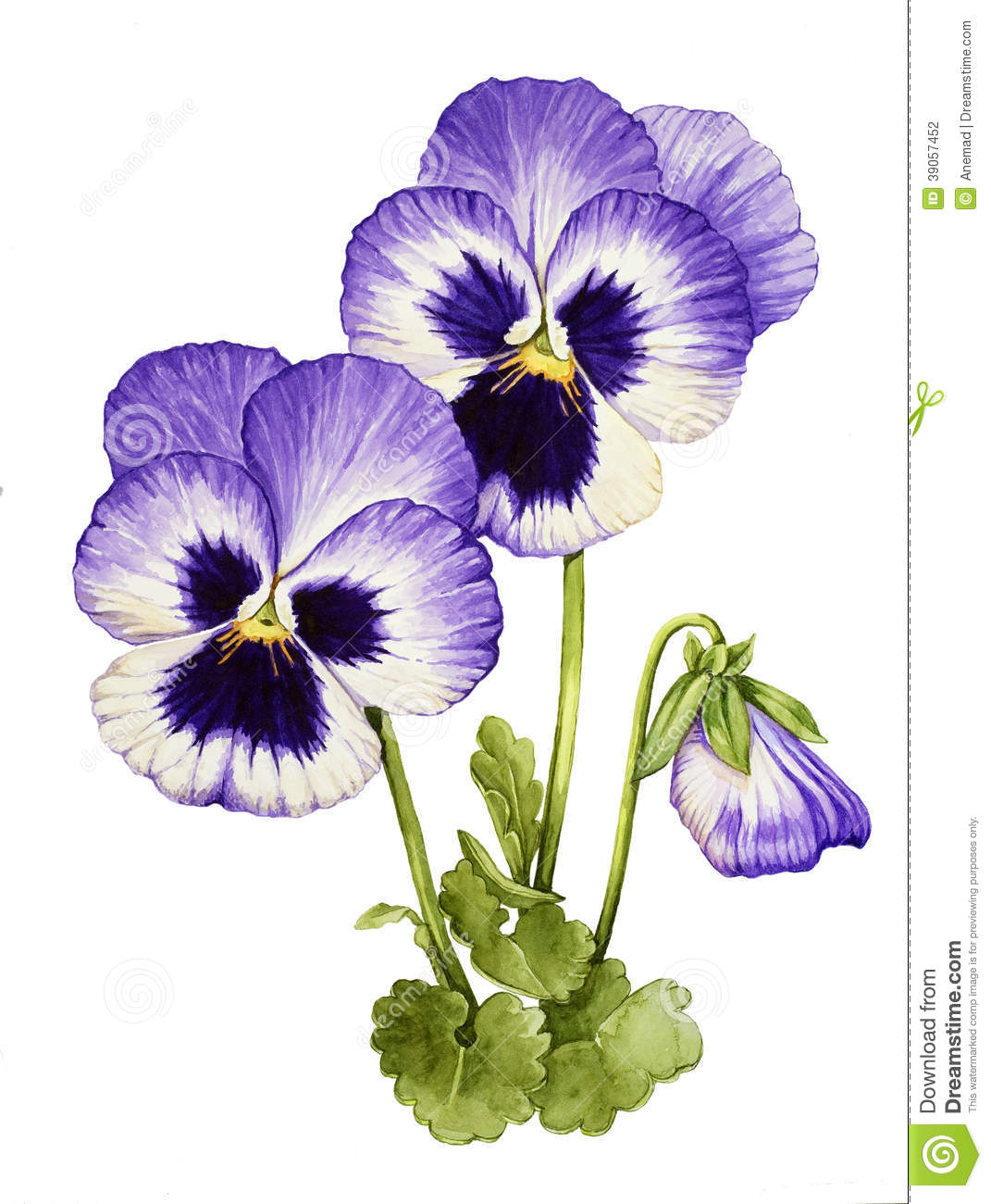 watercolor with pansies stock illustration illustration pansy clip art free pansy clip art border