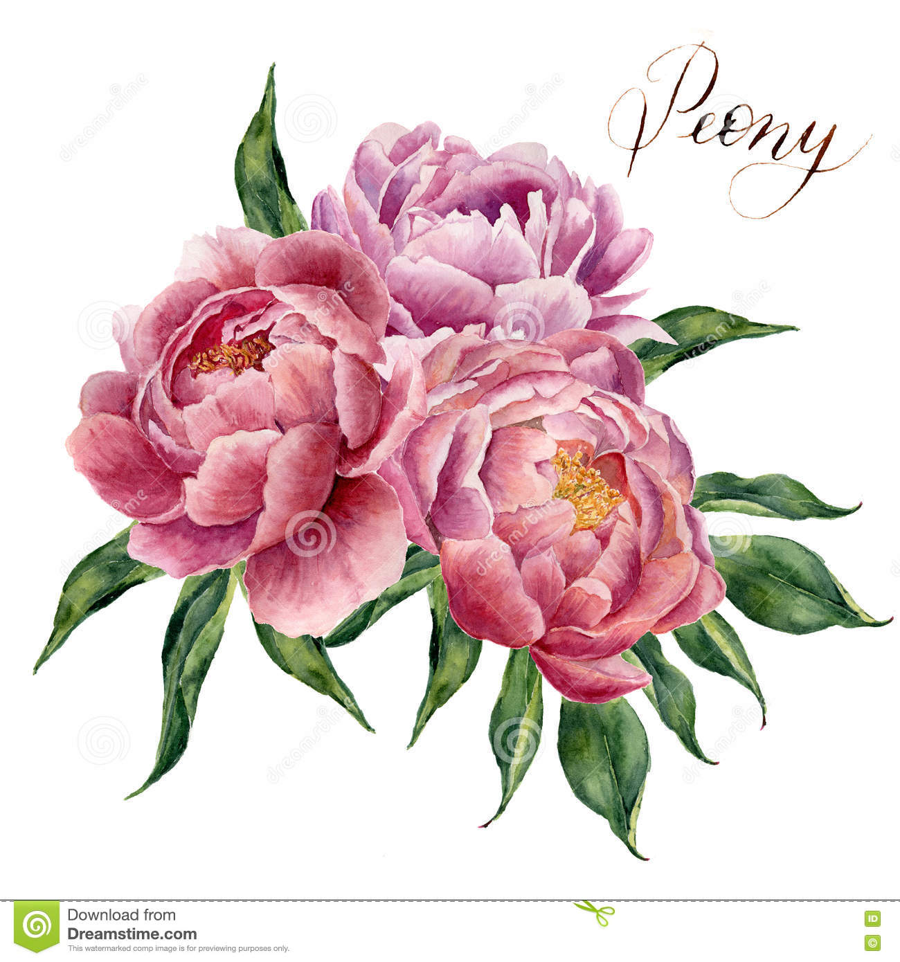 Watercolor peonies bouquet isolated on white background hand royalty free illustration dhlflorist Images