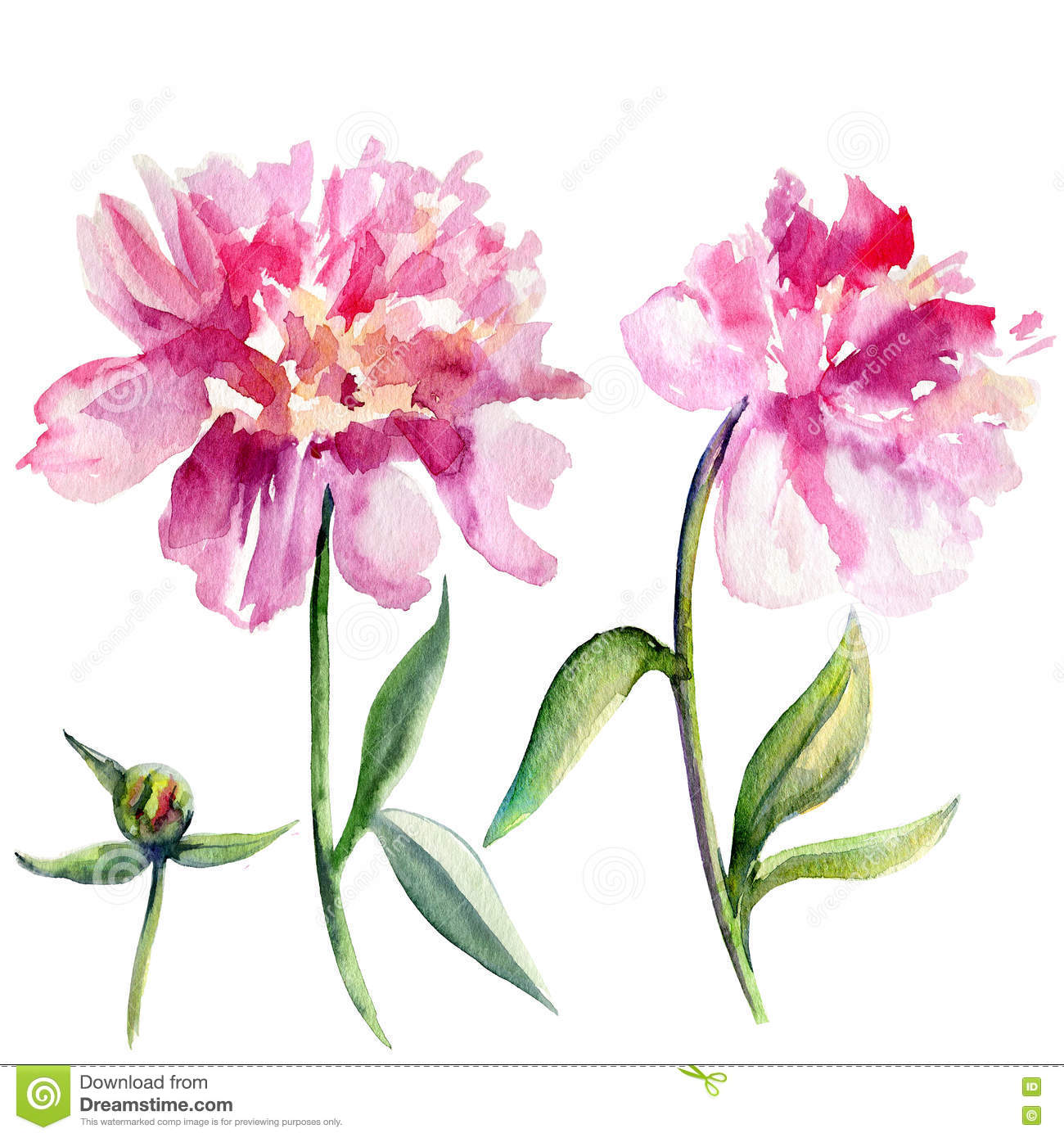 peony flower isolated watercolor illustration royalty beauty salon clip art images beauty salon clip art images