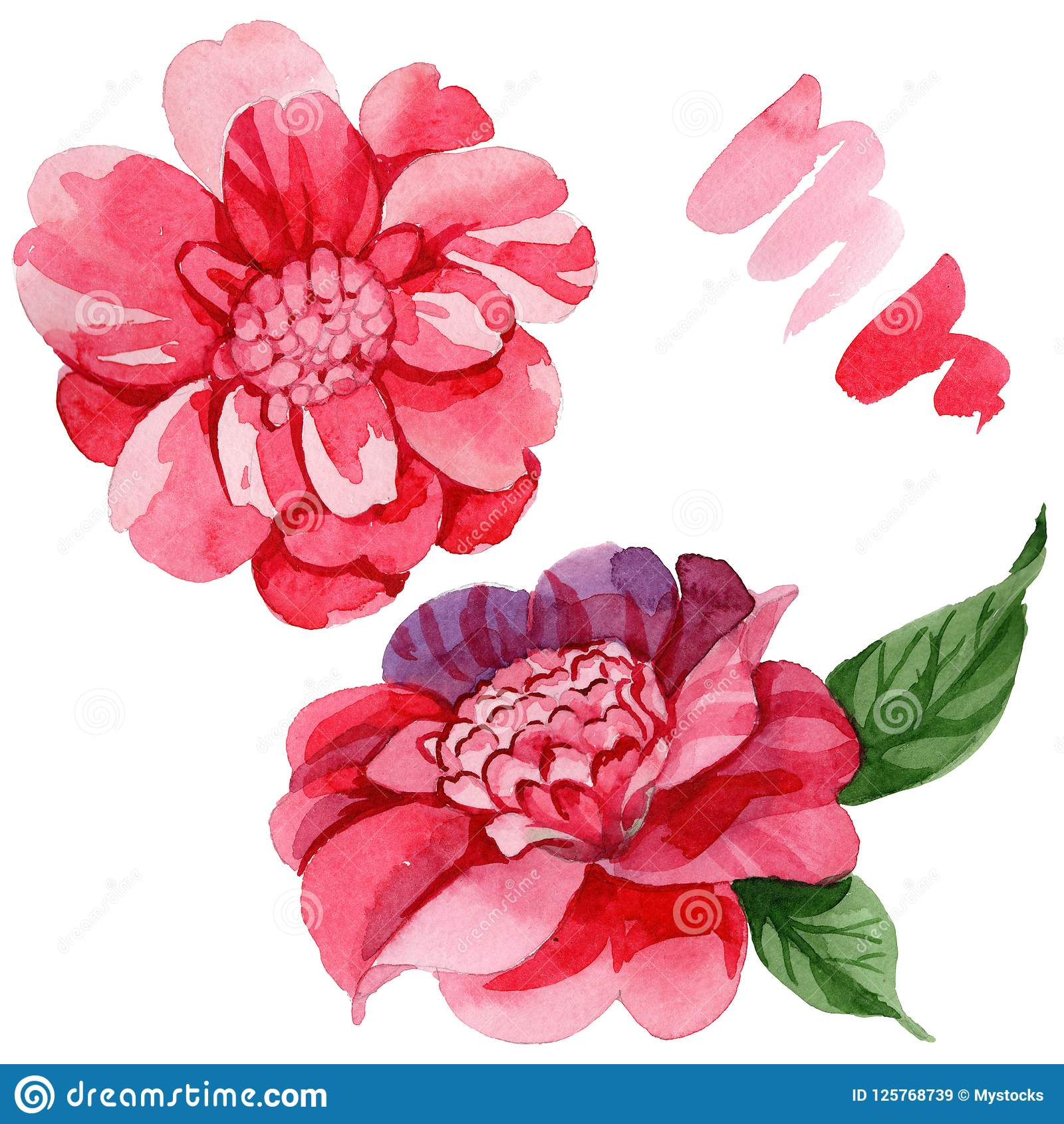 Watercolor Pink Camellia Climbing Flower Floral Botanical Flower