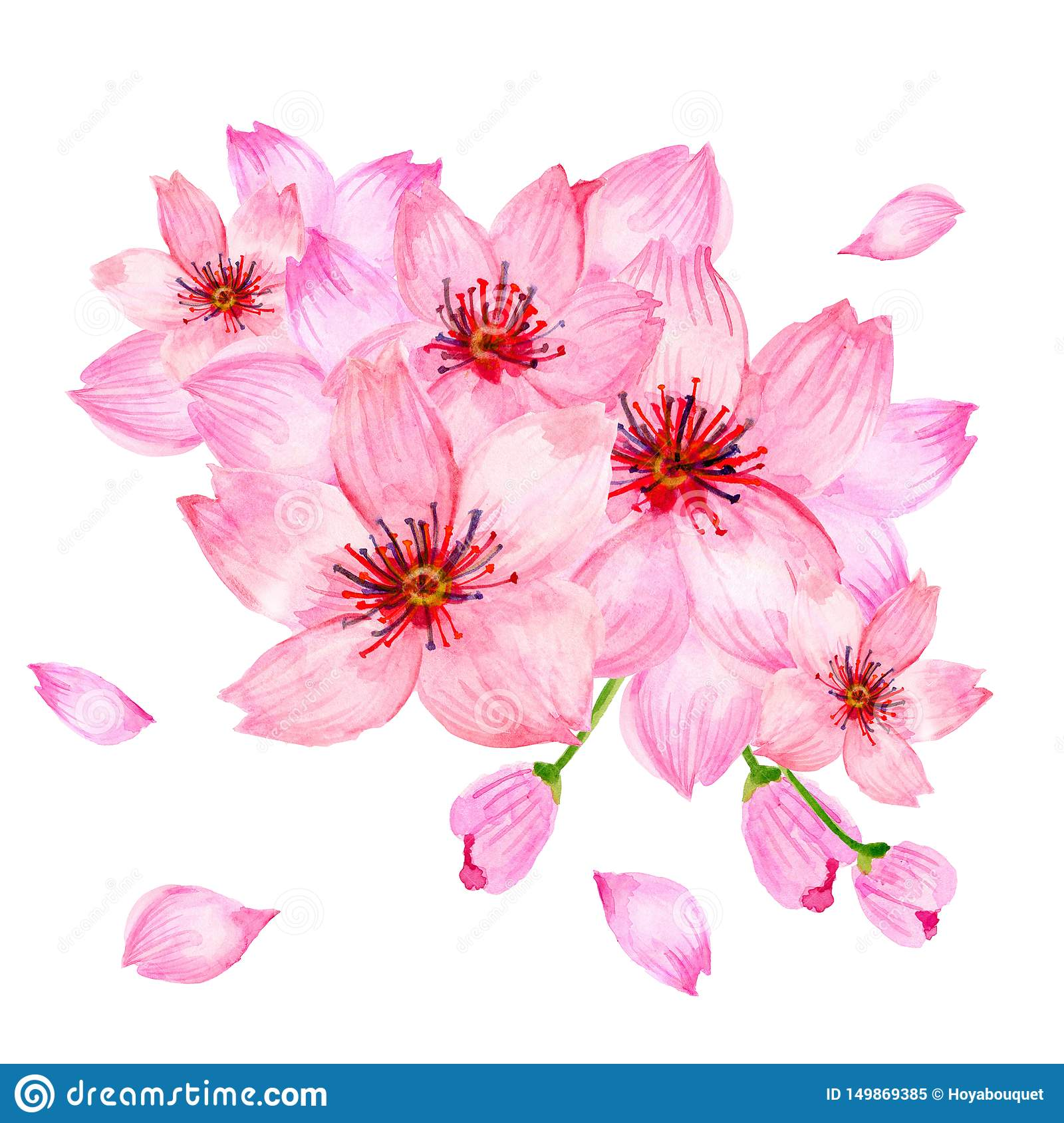 Watercolor Pink Cherry Blossom Sakura Japan Season Flower