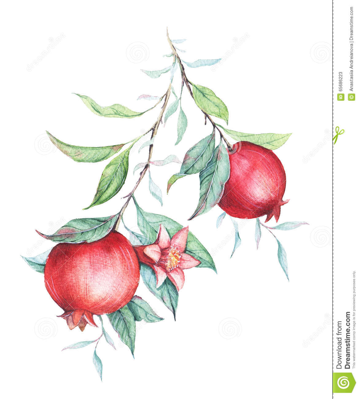 Watercolor Pomegranate (garnet) Branch Stock Illustration ...