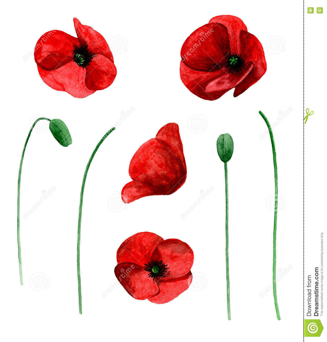 Watercolor Poppy Vector Isolated Stock Vector Illustration Of
