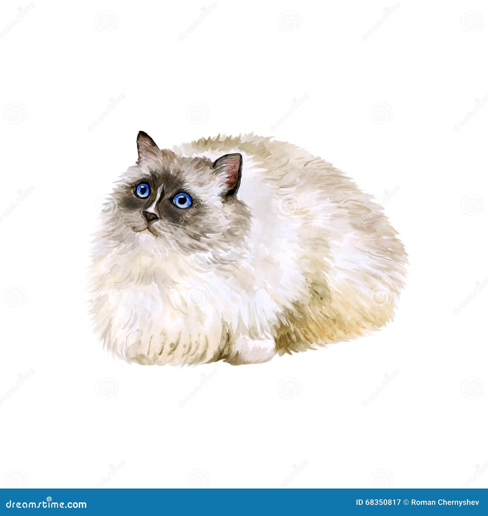 Watercolor Portrait American USA Ragdoll Cat White