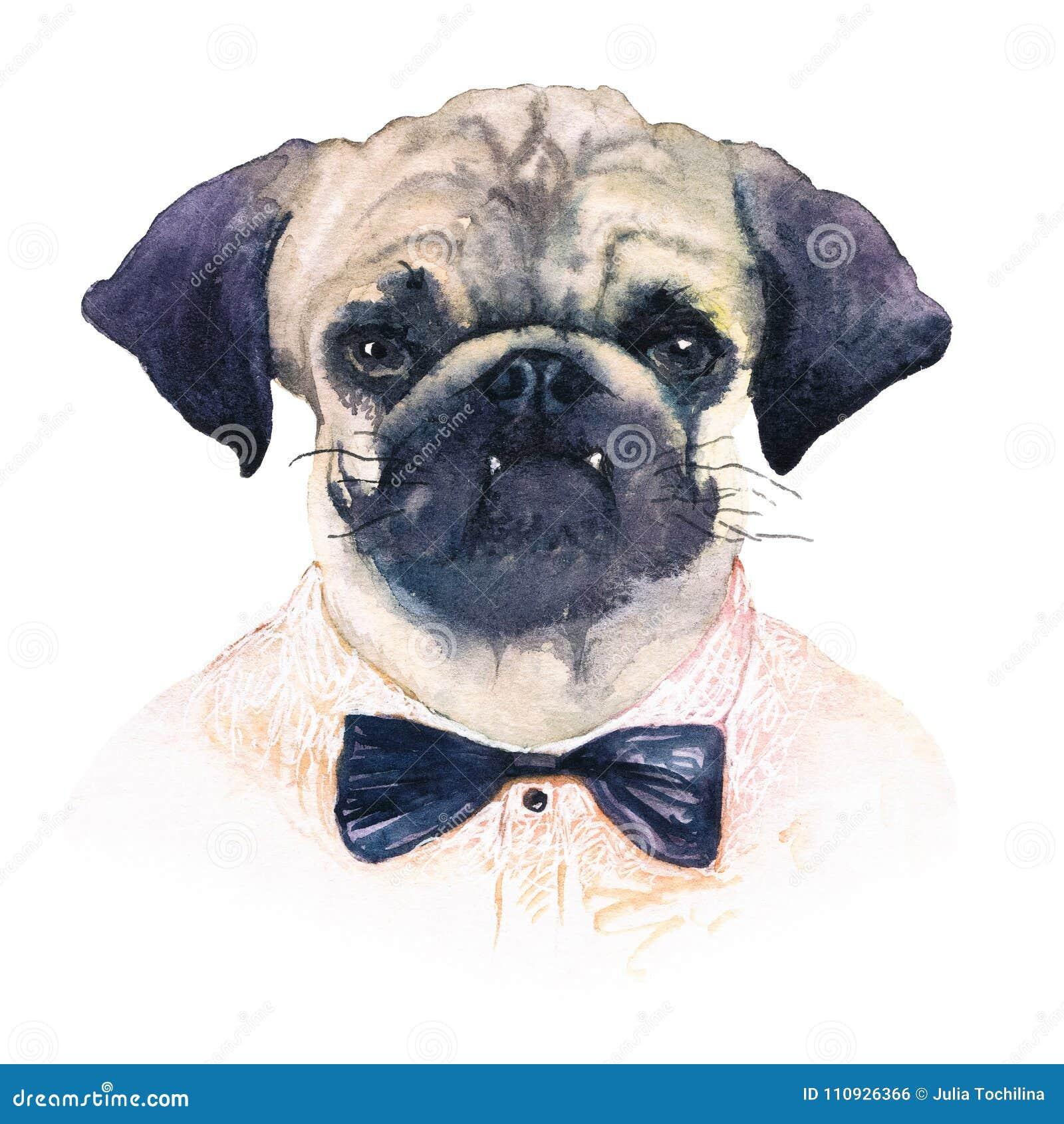 f65da79b69de Watercolor Portrait Of A Pug-dog Stock Illustration - Illustration ...