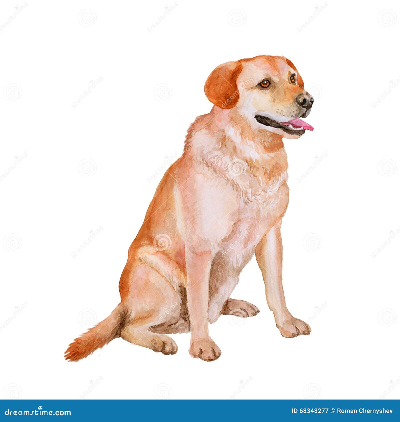 Watercolor Portrait Of Red, White Labrador Retriever Breed ...