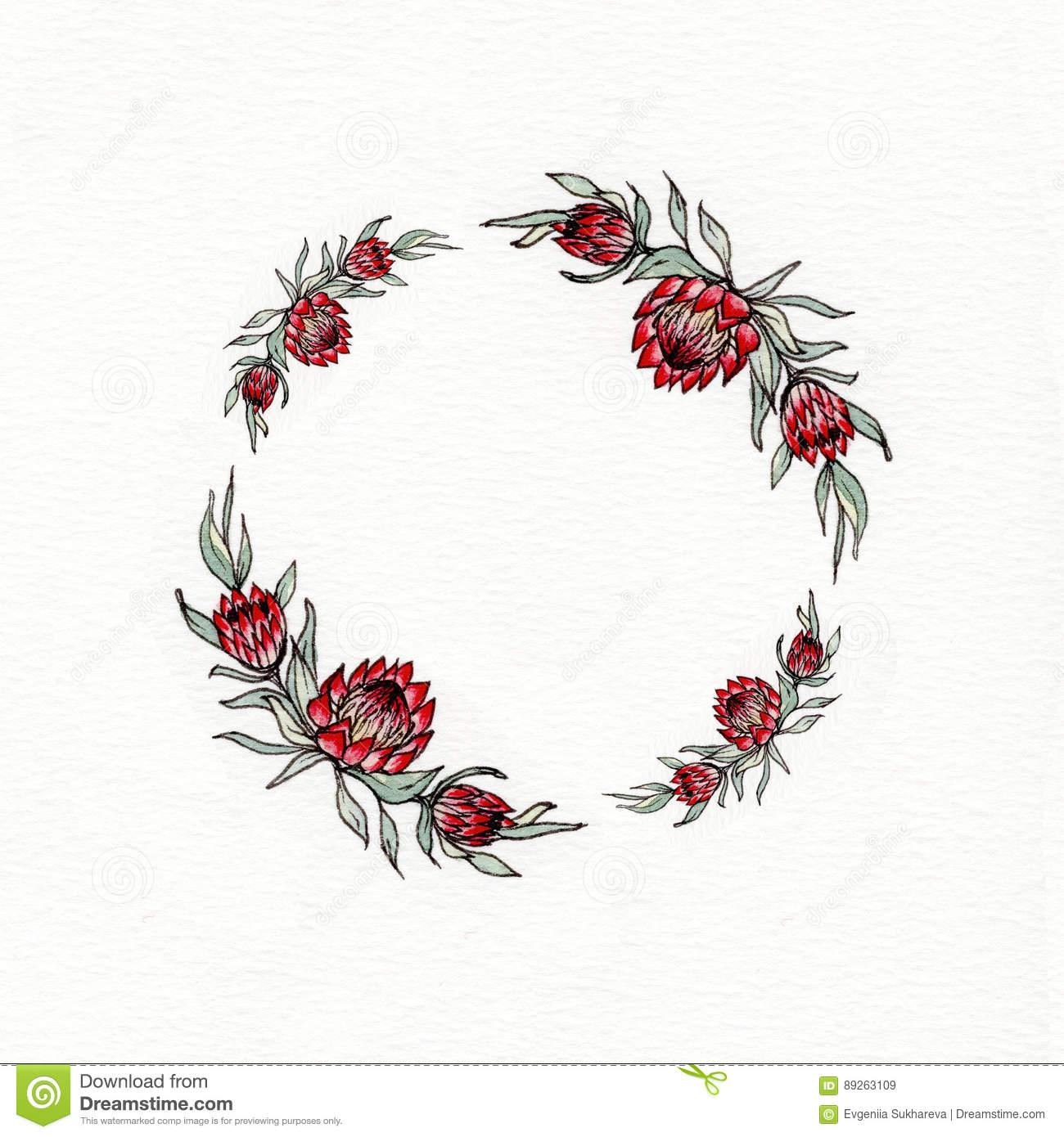 Watercolor Protea Flower Wreath Royalty Free Stock