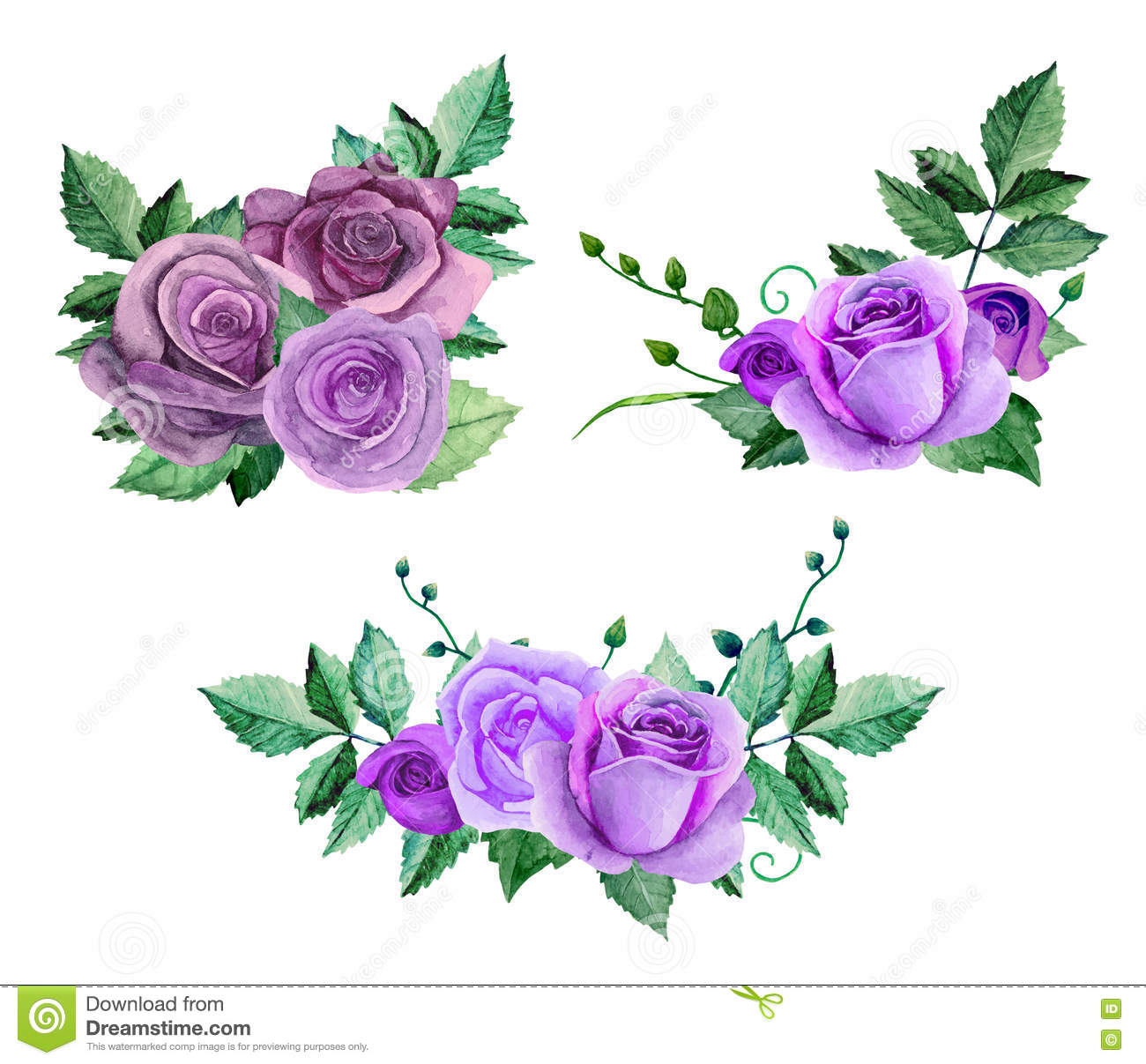 Watercolor Purple Roses Vector Stock Vector - Illustration ...
