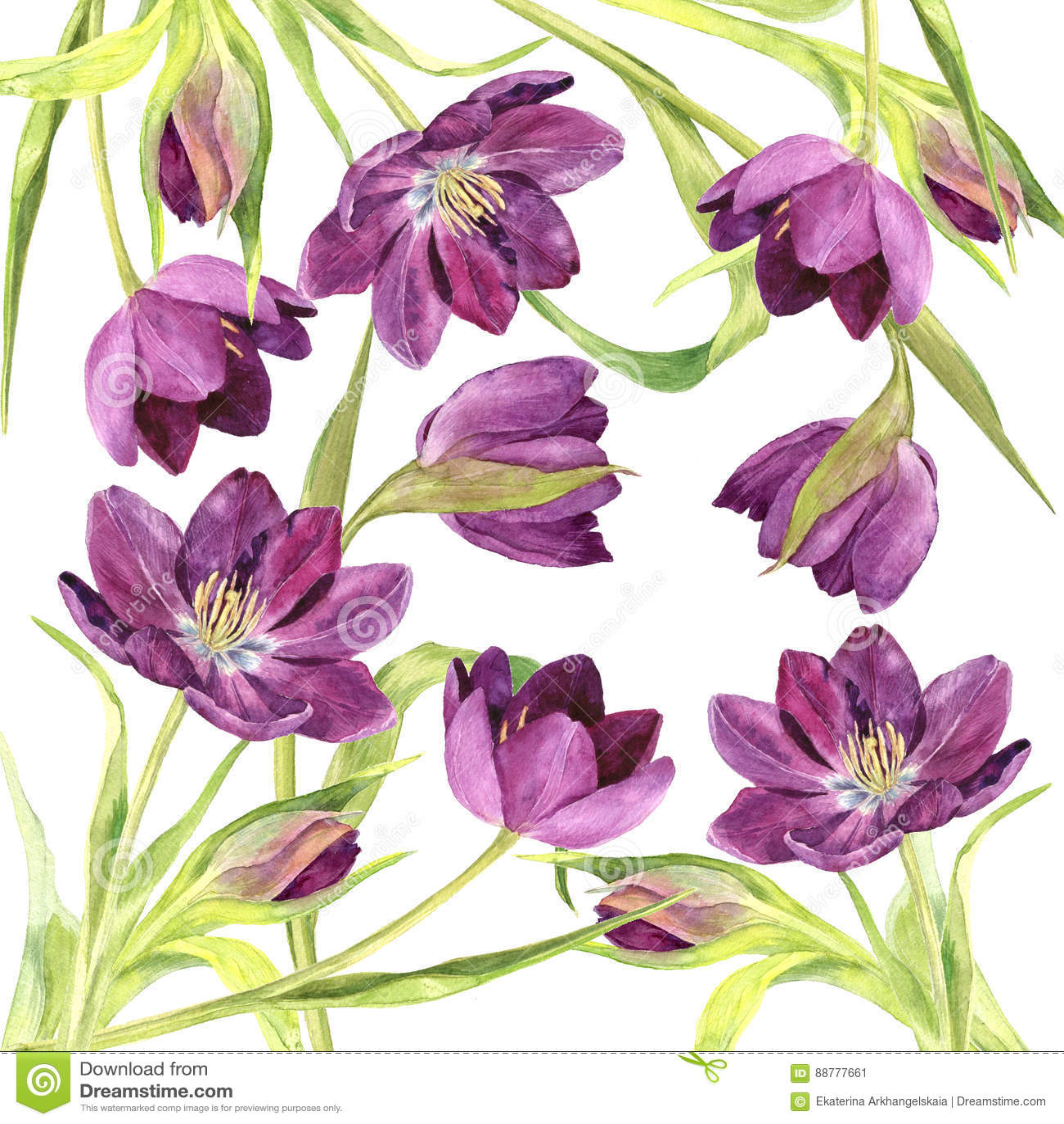 watercolor purple tulips stock illustration illustration of