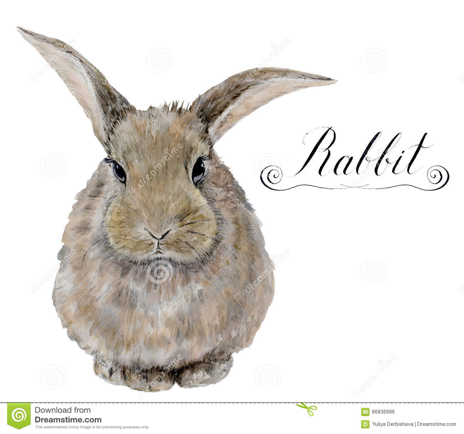 Realistic rabbit illustration - photo#5