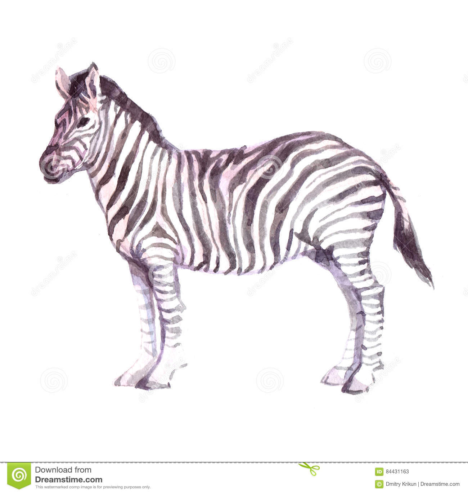 2d59acb1b Watercolor Realistic Zebra Animal Stock Illustration - Illustration ...