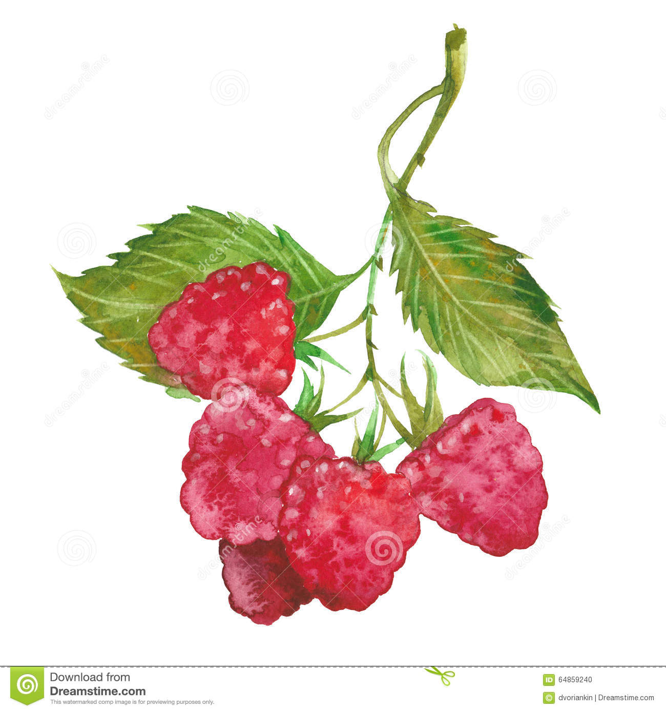 Watercolor Red Raspberry Stock Illustration - Image: 64859240
