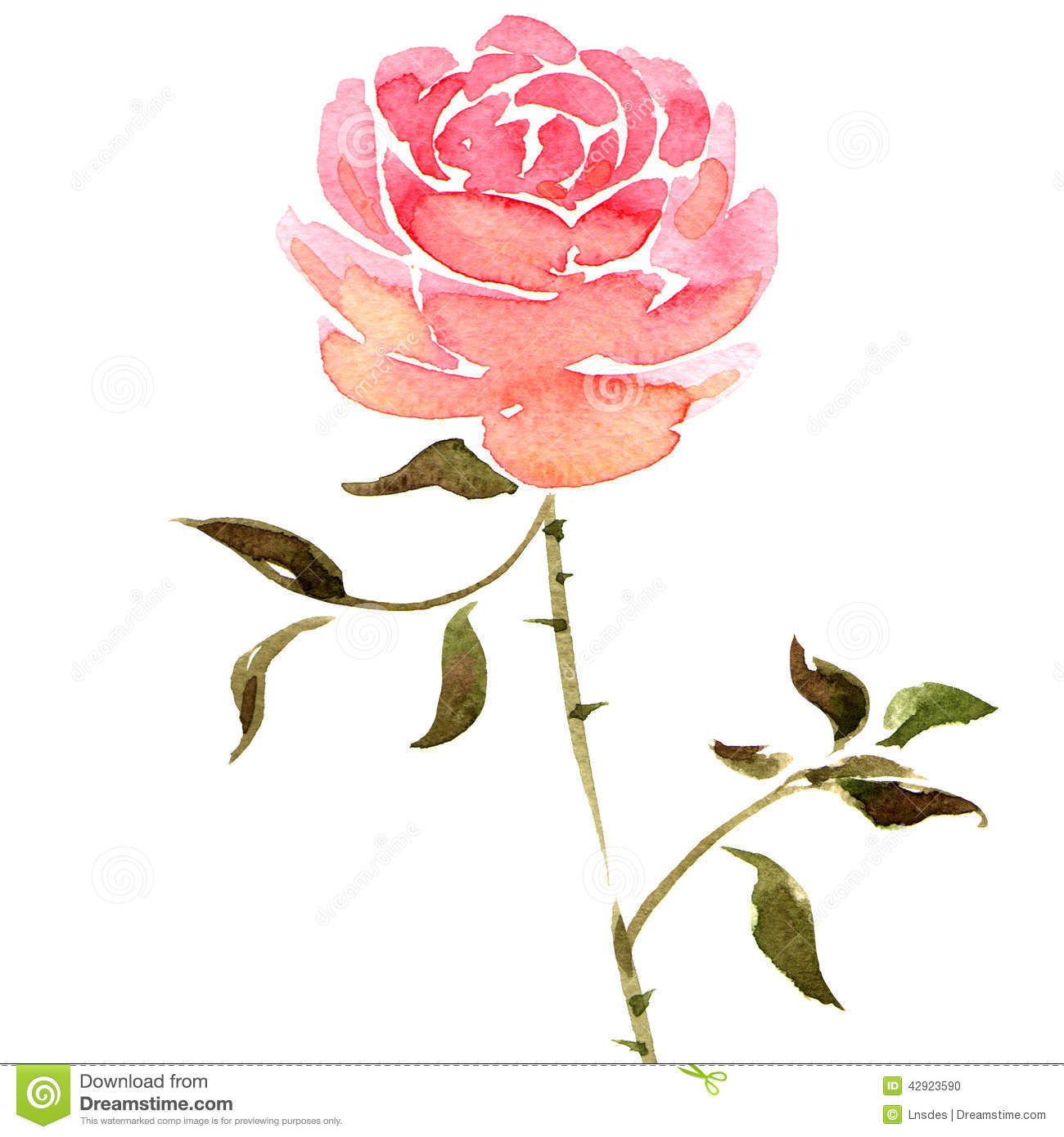 Watercolor rose flower stock illustration. Illustration of ...