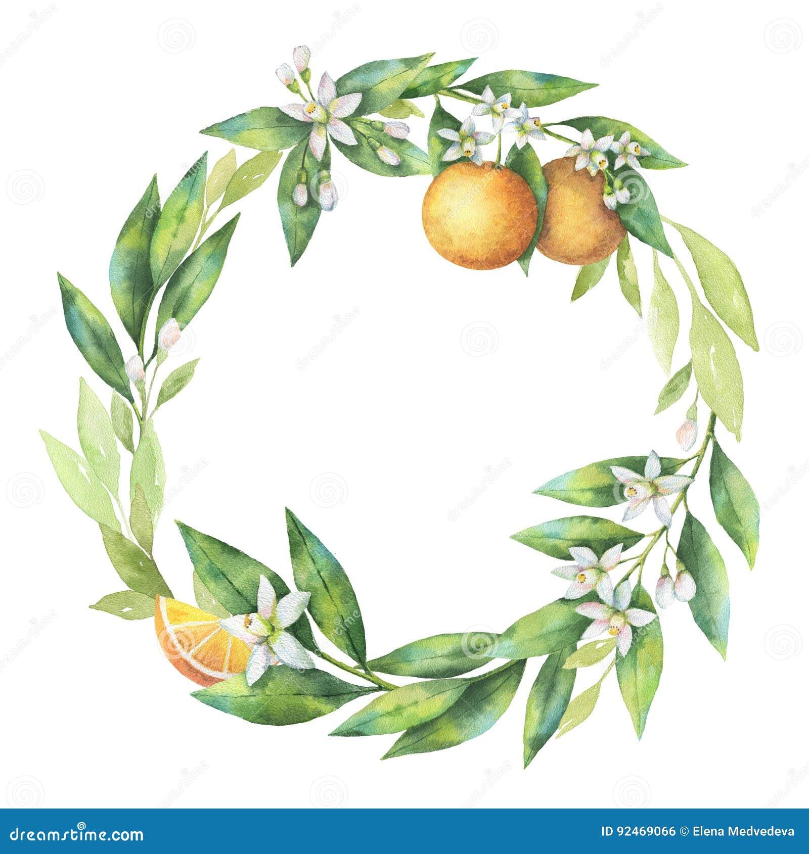 Orange Branch Stock Illustrations 52 012 Orange Branch Stock Illustrations Vectors Clipart Dreamstime