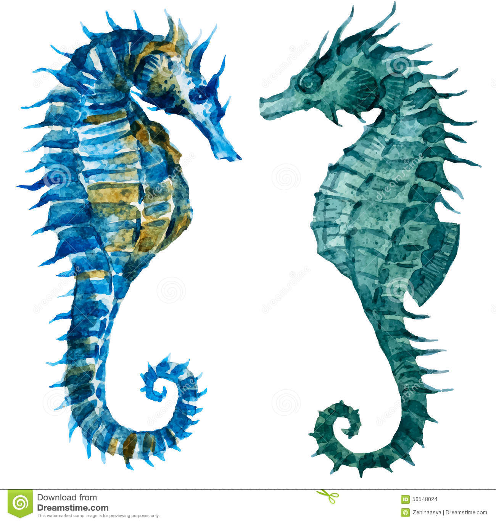 watercolor seahorses stock vector illustration of