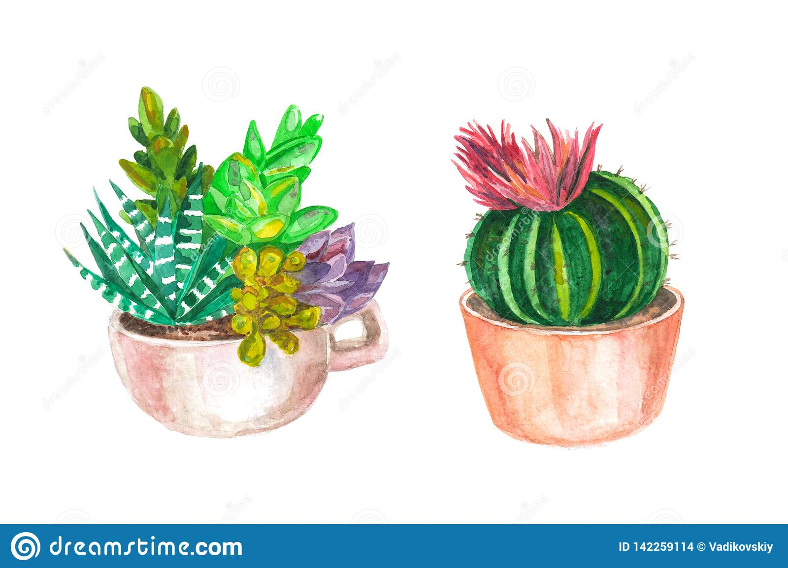 Watercolor Seamless Pattern Of Cacti And Succulents Watercolor Background Stock Illustration Illustration Of Paper Poncho 142259114