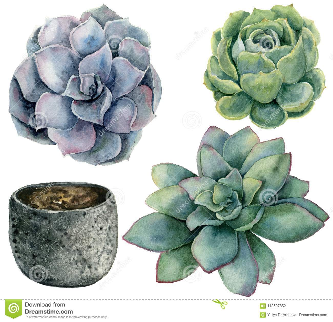 Watercolor Set With Blue And Green Succulent With Pot Hand Painted Flowers And Pot Isolated On White Background Stock Illustration Illustration Of Decorative Combination 113507852