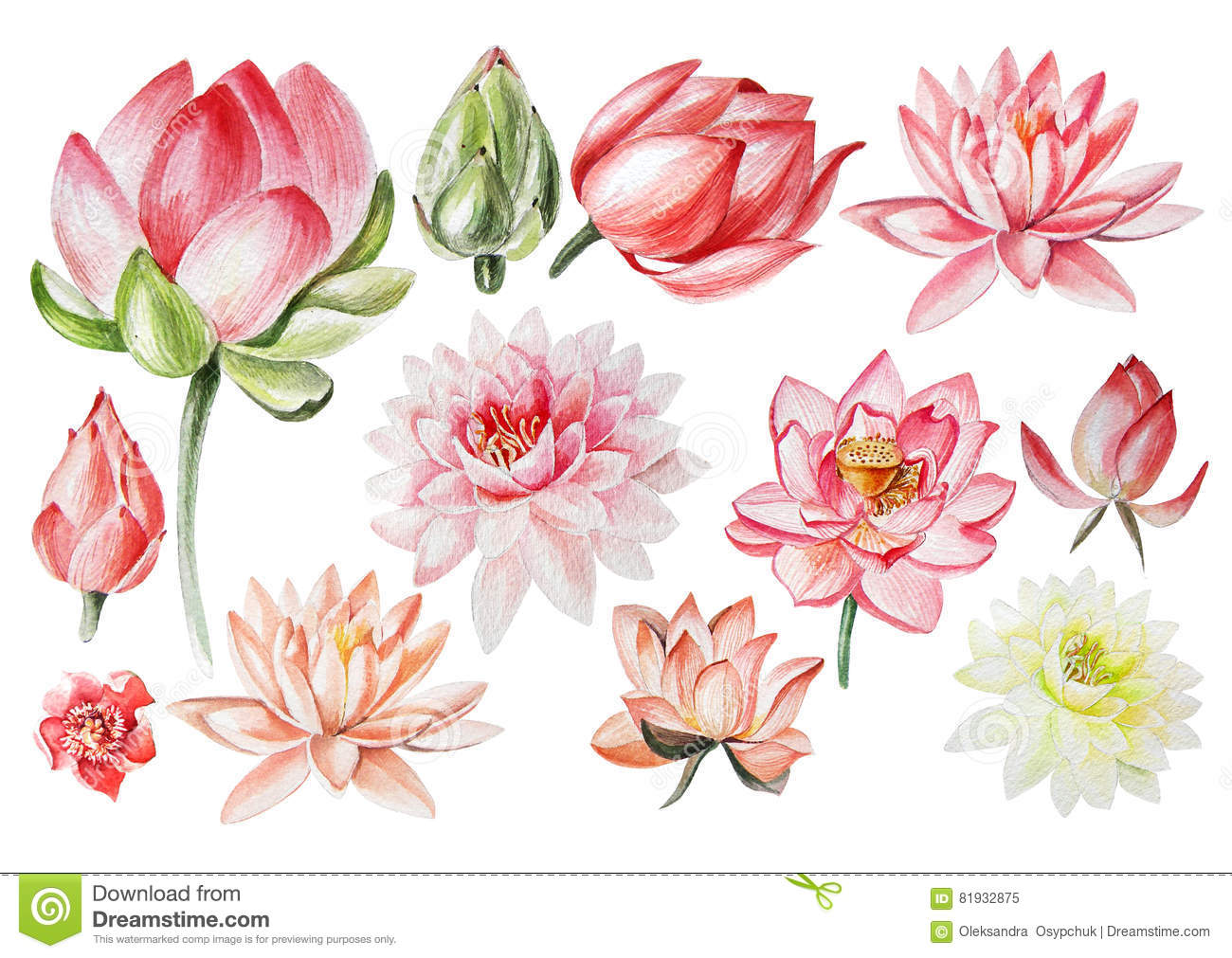 Watercolor Set With Lotus Flowers Stock Illustration