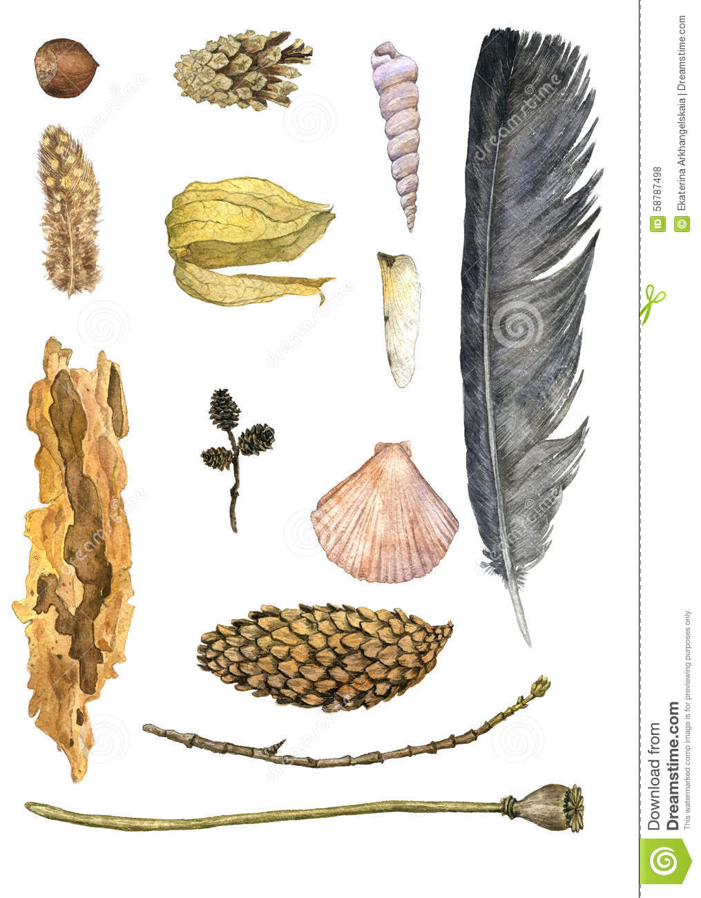 objects nature watercolor shell twig dragonfly pine wing piece bark