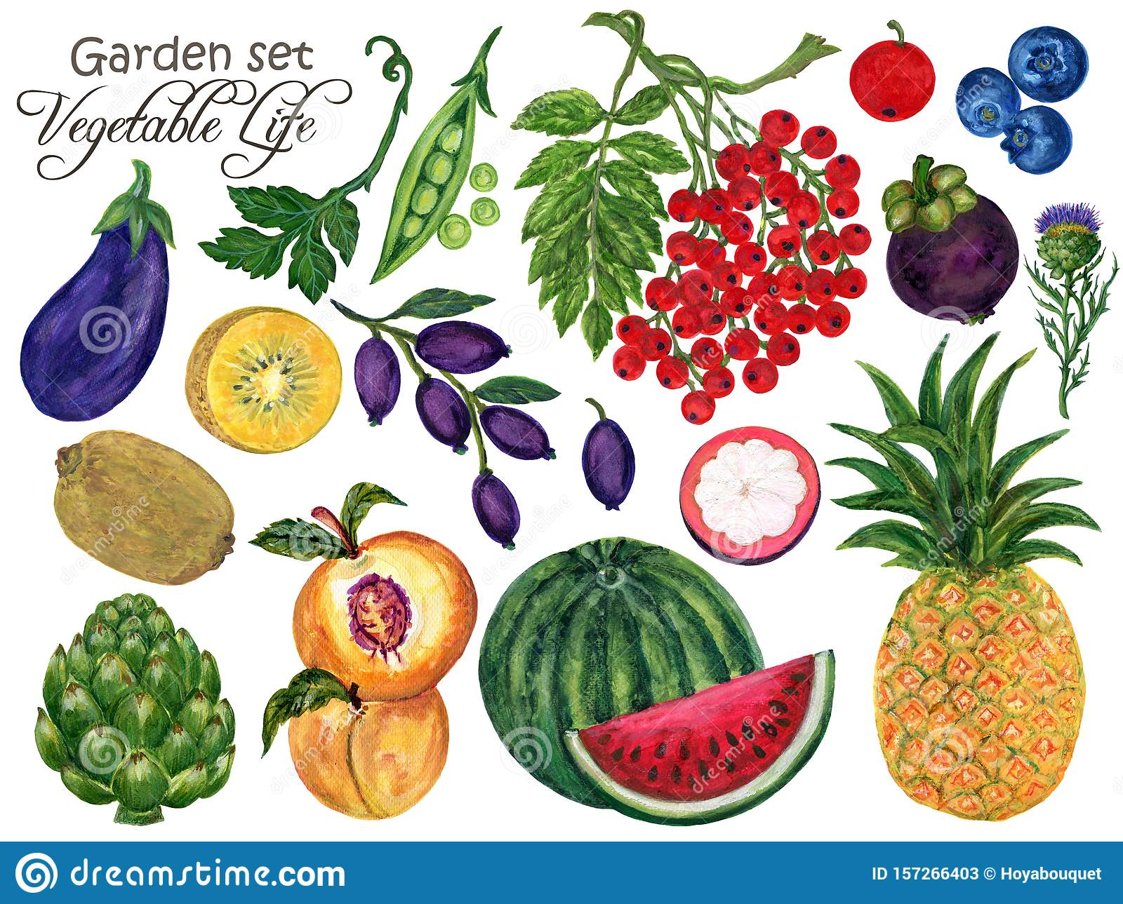 Watercolor Set vegetable and fruits seasons summer spring garden and tropical Hand-Painted Isolated on white background