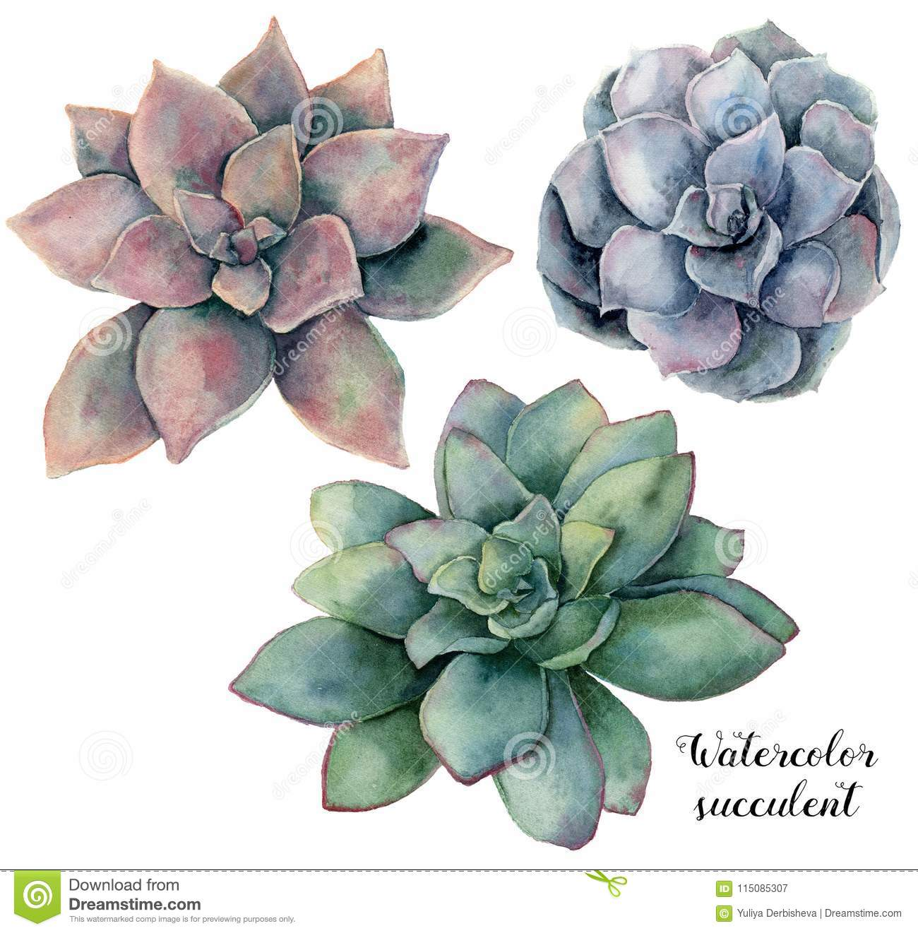 Watercolor Set With Violet Pink And Green Succulent Hand Painted Plant Isolated On White Background Natural Floral Stock Illustration Illustration Of Florist Branch 115085307
